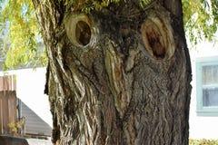 注视结构树 免版税库存图片
