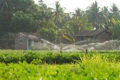 水注 庭院的灌溉系统 库存图片