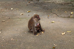 泰国亚洲猴子 免版税图库摄影