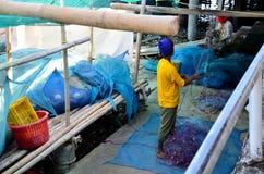 泰国人运作的拉扯和精选的贝类从渔网在fi 免版税图库摄影