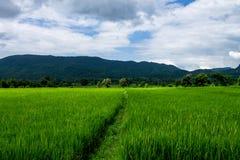 泰国农业 免版税库存图片