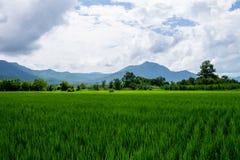 泰国农业 免版税库存照片