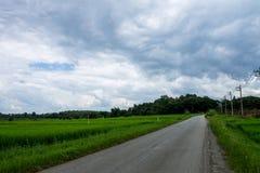 泰国农业 免版税图库摄影