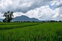 泰国农业 图库摄影
