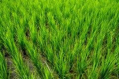 泰国农业 库存照片