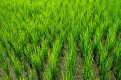 泰国农业 库存图片