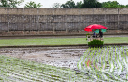 泰国农夫使用了移植汽车 免版税库存照片