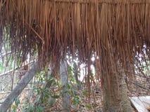 泰国农夫村庄 库存图片