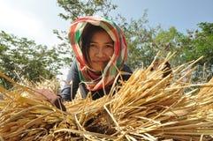 泰国农夫 免版税库存照片