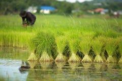 泰国农夫 免版税图库摄影