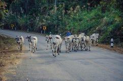 泰国卡伦小山部落 库存照片