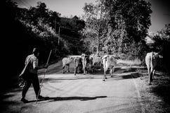 泰国卡伦小山部落 免版税图库摄影