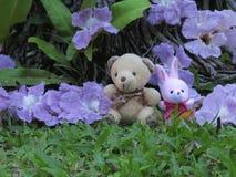 泰国名字桃红色花是 库存图片