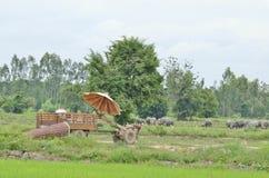 泰国国家(地区)拖拉机 库存照片