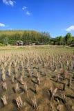 泰国域的米 图库摄影