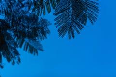 泰国夜空 库存照片