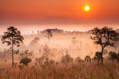 泰国大草原 库存图片