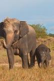 泰国大象的关系 免版税库存照片