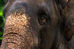 泰国大象的面孔 库存照片