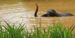 泰国大象 库存照片