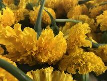泰国开花美好的好的黄色 库存照片