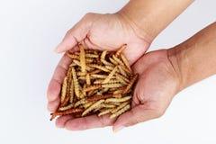 泰国昆虫,快餐的油煎的昆虫粉虫 免版税库存图片