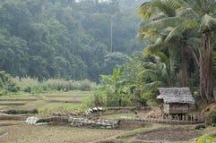 泰国村庄 图库摄影