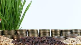 泰国沙文主义情绪与堆金钱硬币和堆麦子 影视素材