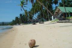 泰国海滩前的椰子 图库摄影