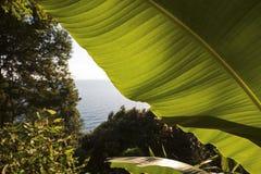 泰国湾被看见在树和香蕉叶子之间 免版税图库摄影
