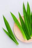 泰国点心和温泉芳香疗法pa的泰国草本成份 免版税库存照片