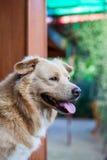 泰国狗 库存照片