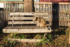 泰国猫坐木椅子在庭院里 免版税库存照片