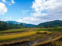 泰国的农夫 农业学家泰国乡下生活样式 免版税库存图片