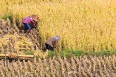 泰国的农夫 免版税库存图片
