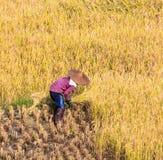 泰国的农夫 库存照片