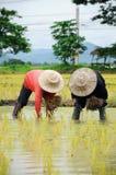 泰国的农夫 免版税图库摄影
