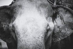 泰国的动物 库存照片