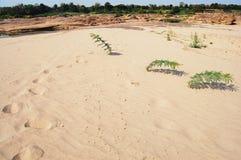 泰国的大峡谷沙漠和湄公河是名字山姆帕纳Bok三千个孔在乌汶叻差他尼泰国 库存照片