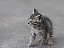 泰国的小猫 图库摄影