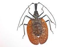从泰国的昆虫 库存照片