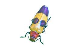 从泰国的昆虫 库存图片