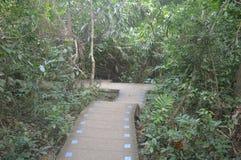 泰国的森林视图 免版税库存图片