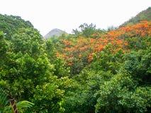 泰国的森林 库存图片