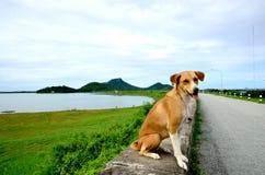 泰国的狗 免版税库存照片