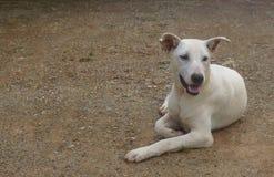 泰国的狗 库存图片