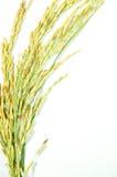 泰国的米 免版税图库摄影