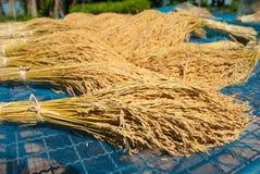 泰国的米 库存图片