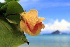 泰国的花 图库摄影
