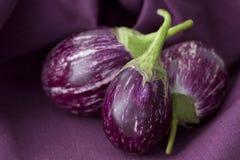 泰国的茄子 免版税库存图片